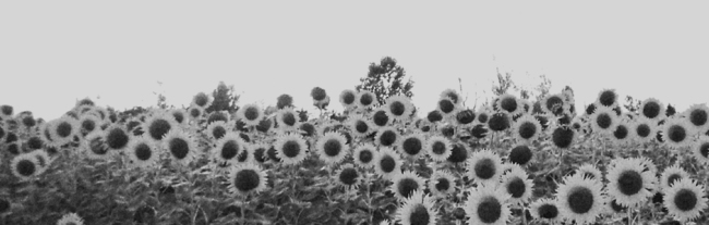 Photographie illustrant ce nouvel album - Jesu/Sun Kil Moon